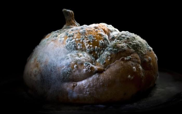 гнилые офощи фрукты фото 1 (700x437, 50Kb)