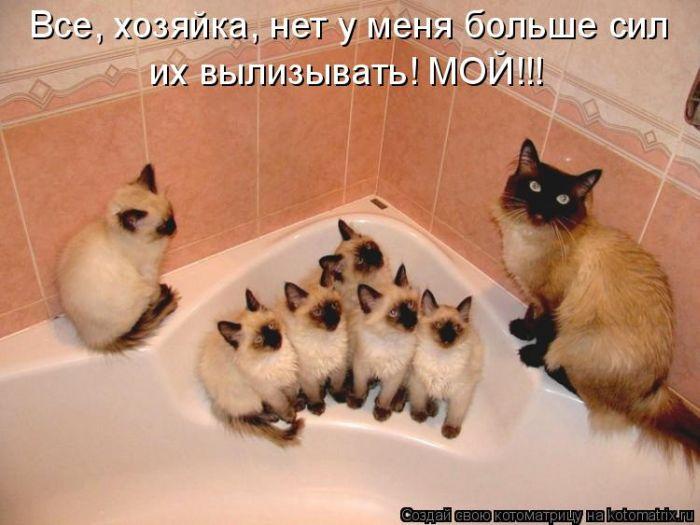1300413752_kotomatritsa-10 (700x525, 53Kb)
