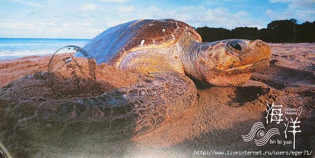 черепаха (640x322, 204Kb)