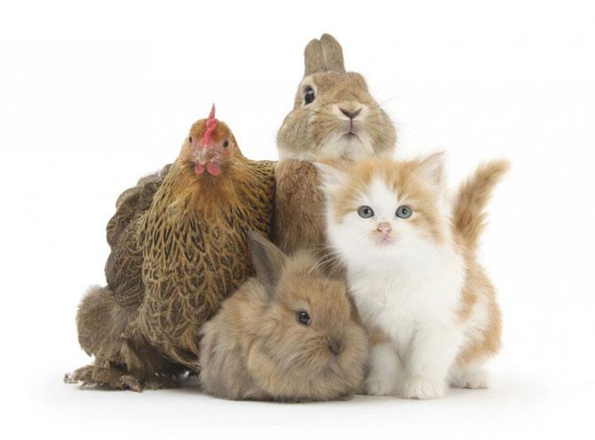 смешные животные фото (670x495, 38Kb)