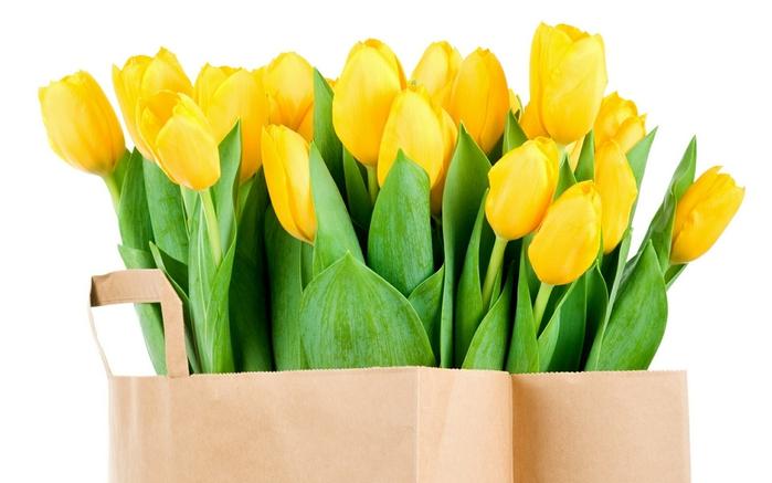 Желтые цветы картинки 8