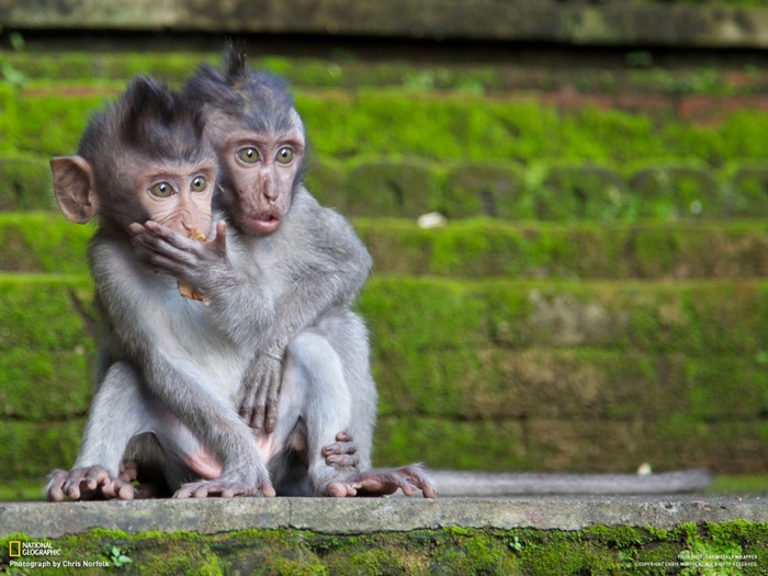 прикольные фото животных (700x525, 148Kb)
