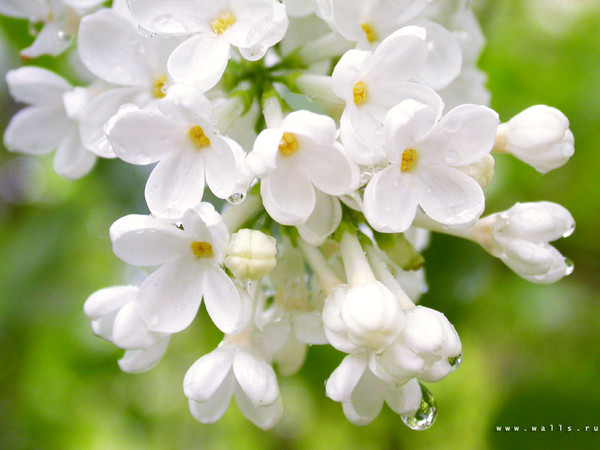 4783955_flower_0329 (600x450, 74Kb)