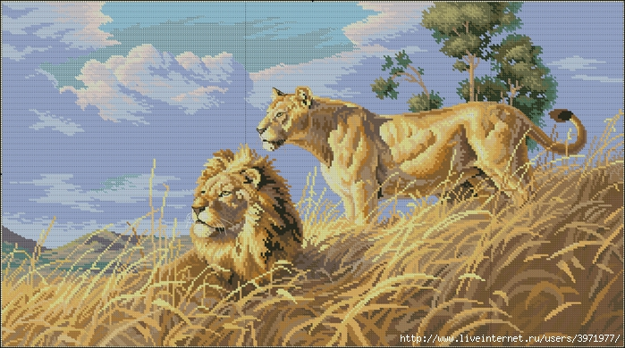 3971977_Dimensions03866African_Lions (700x390, 314Kb)
