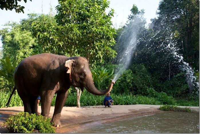 Фото-путешествие на острова Таиланда 14 (700x468, 152Kb)