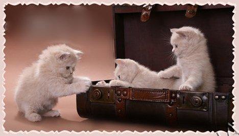 http://img1.liveinternet.ru/images/attach/c/5/86/930/86930375_4287072_1293029637_kotiatavchemodane2ff.jpg