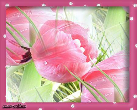 тюльпаны (450x363, 231Kb)