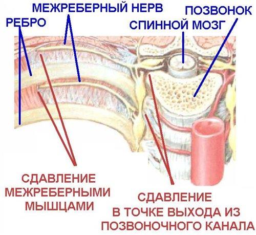 3925073_mezhreb (500x459, 58Kb)