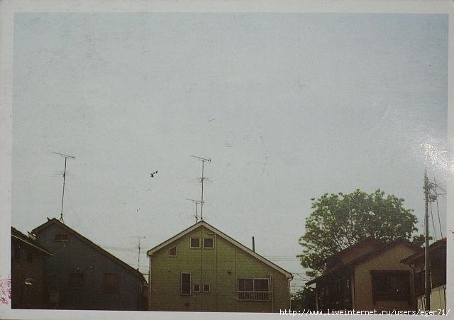 крыши (640x451, 133Kb)