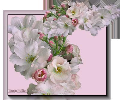 Цветощий-сад (400x334, 183Kb)