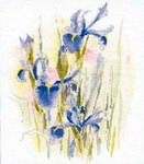 Превью Derwentwater WCI Irises (298x341, 38Kb)