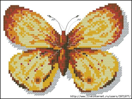 3971977_Butterflies_139 (539x406, 251Kb)