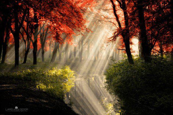 Игра света в лесу в окрестностях Амстердама... (604x402, 64Kb)