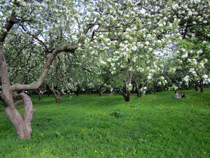 Коломенское Сады 11 (700x525, 223Kb)