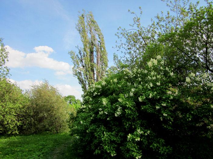 Коломенское Сады 28 (700x525, 170Kb)