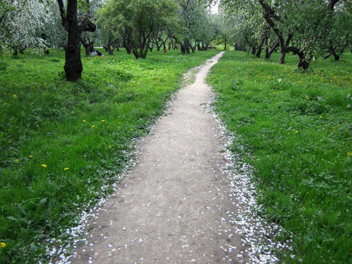 Коломенское Сады 38 (700x525, 188Kb)