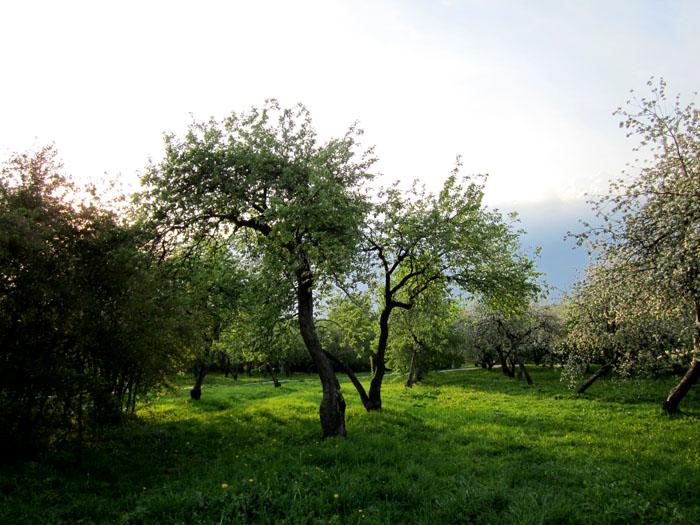 Коломенское Сады 51 (700x525, 147Kb)