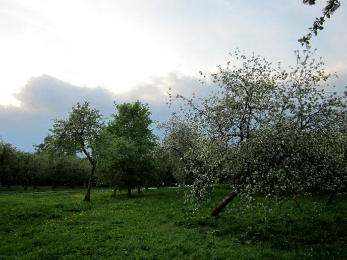 Коломенское Сады 53 (700x525, 135Kb)