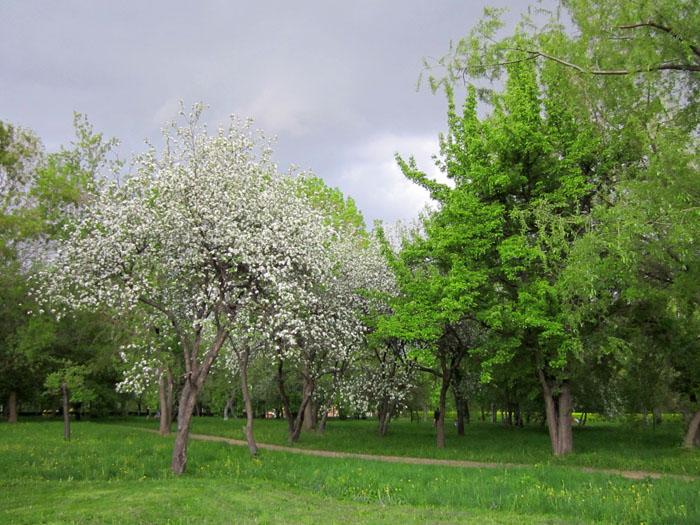 Коломенское Сады 59 (700x525, 159Kb)