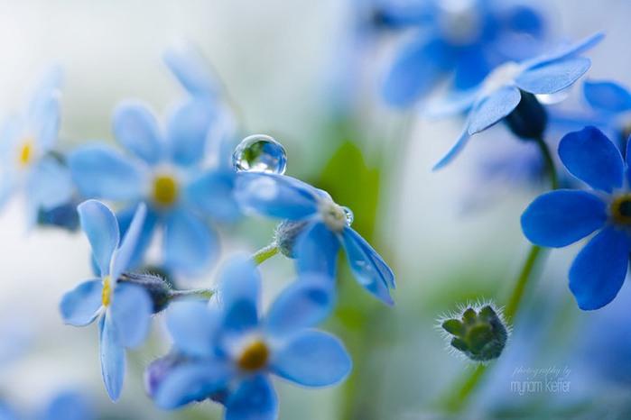 красивые фото цветов Myriam Kieffer 4 (700x466, 51Kb)