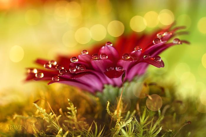 красивые фото цветов Myriam Kieffer 8 (700x466, 68Kb)