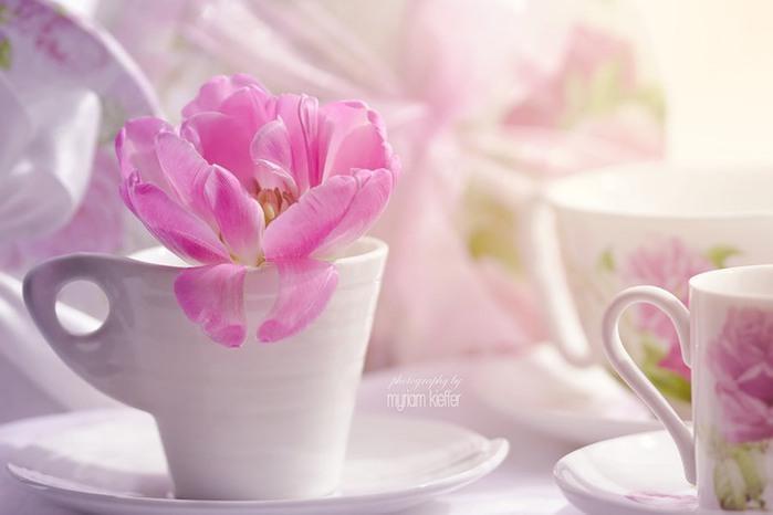 красивые фото цветов Myriam Kieffer 10 (700x466, 45Kb)