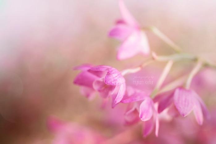 красивые фото цветов Myriam Kieffer 12 (700x466, 33Kb)
