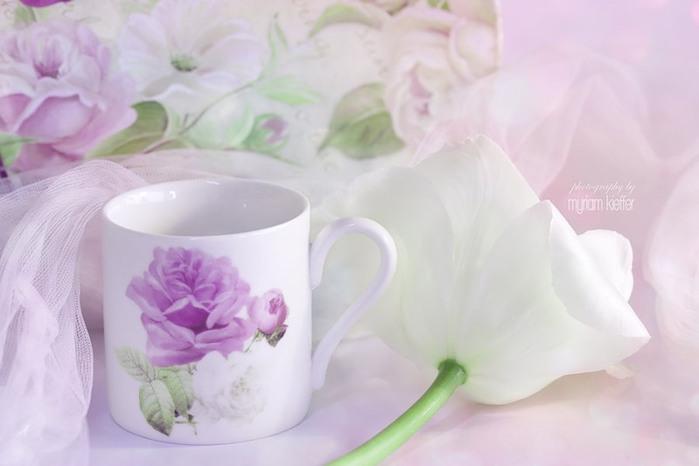 красивые фото цветов Myriam Kieffer 14 (700x466, 45Kb)