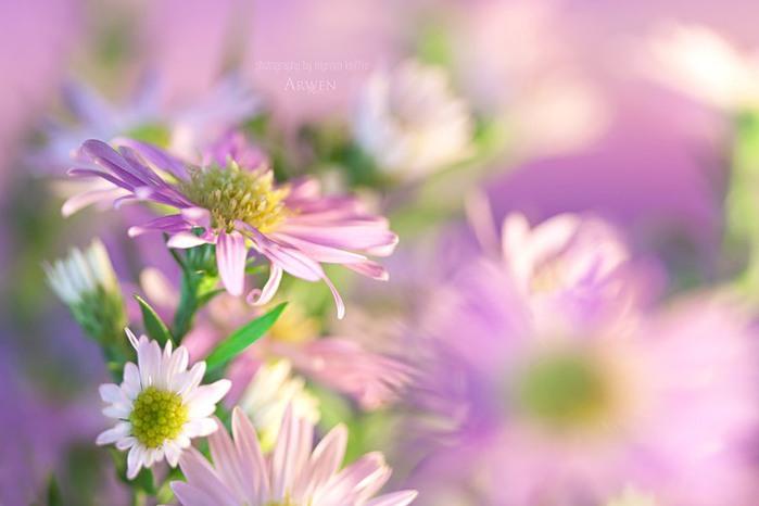 красивые фото цветов Myriam Kieffer 16 (700x466, 51Kb)