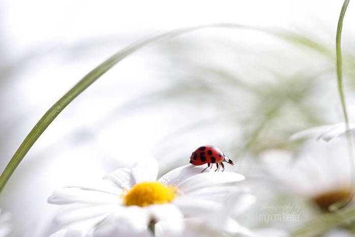 красивые фото цветов Myriam Kieffer 20 (700x466, 36Kb)