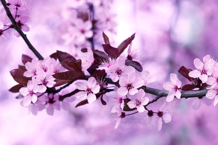 красивые фото цветов Myriam Kieffer (700x466, 73Kb)