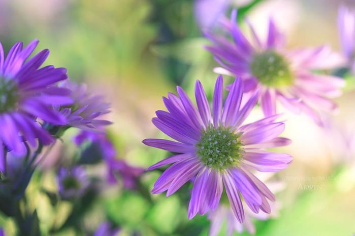 красивые фото цветов Myriam Kieffer 2 (700x466, 62Kb)