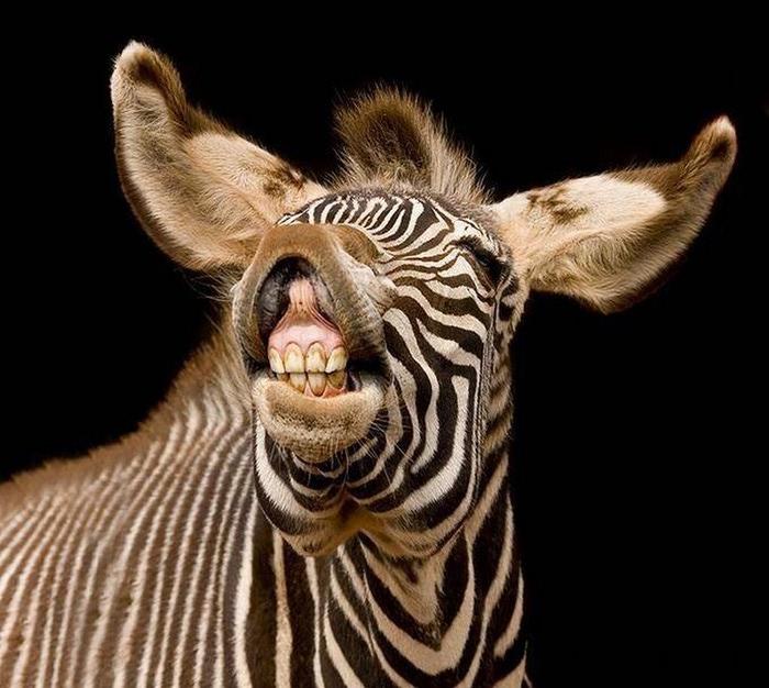 Смешные фотографии с животными 1 (700x626, 104Kb)