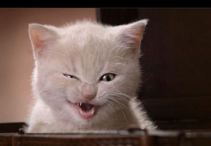 Смешные фотографии с животными 24 (700x484, 44Kb)