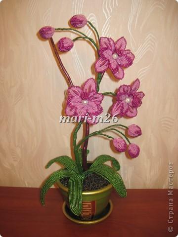 """Голубая орхидея """"Мечта"""