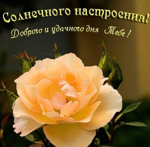 Удачного дня и хорошего настроения открытка