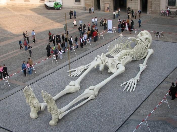 """и """"Путешествующий скелет"""""""