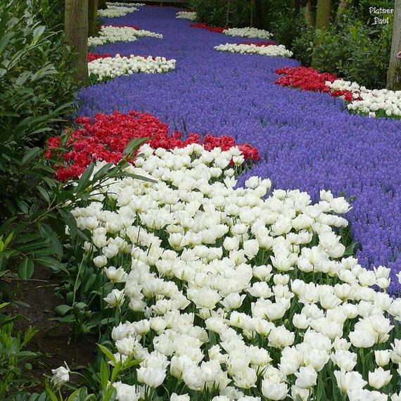 сад дивный (570x570, 92Kb)