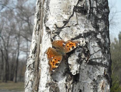 бабочка (460x350, 79Kb)