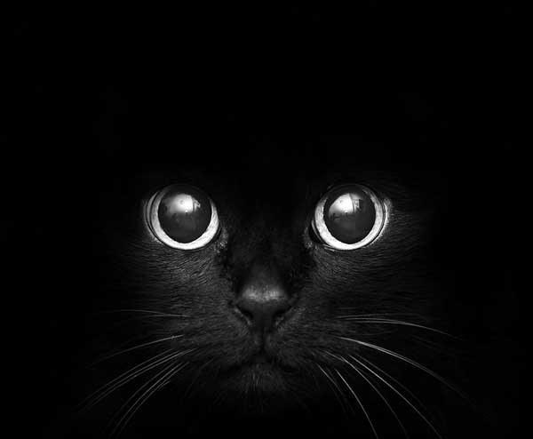 1337115830_Black_Cats_1 (600x494, 20Kb)