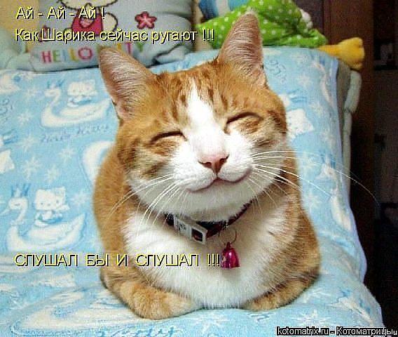 кошки9 (568x480, 60Kb)
