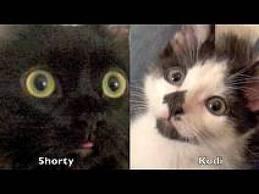 как познакомить двух котов/3518263_images (259x194, 7Kb)