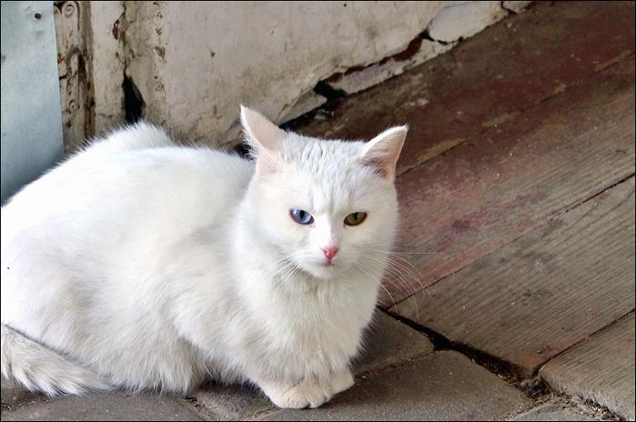 Кошка/3673959_11 (700x464, 152Kb)