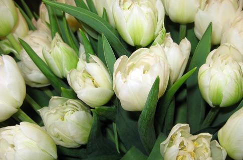 тюльпаны.jpg5 (485x320, 57Kb)