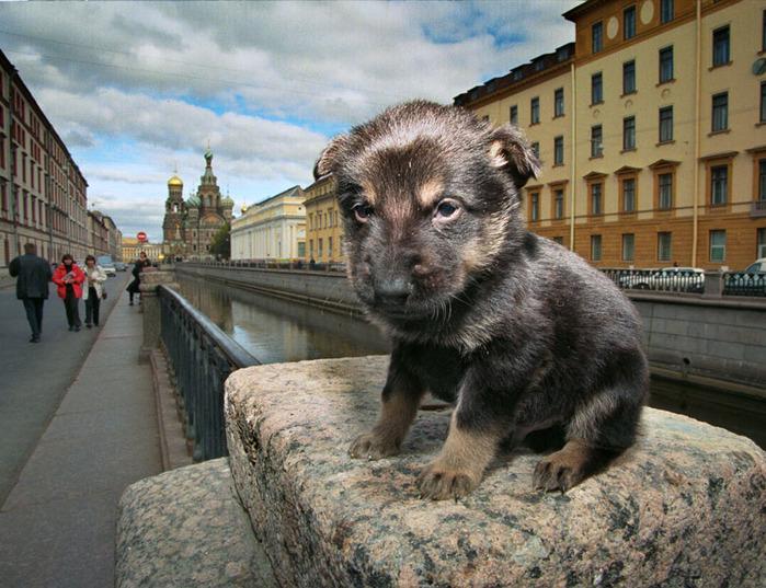 http://img1.liveinternet.ru/images/attach/c/5/87/247/87247297_large_2352988_557844.jpg height=572