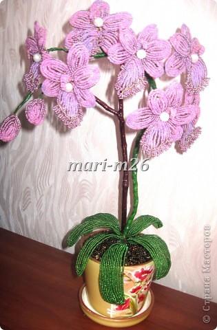 Бисероплетение цветы мастер класс с пошаговым фото орхидея