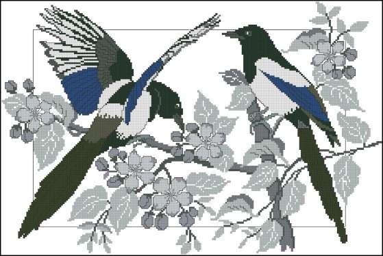 Превью TG Birds (559x374,