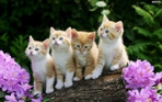 Превью beautiful_cats_wallpaper_d2914 (700x437, 247Kb)