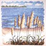Превью Sea Oats (400x396, 35Kb)