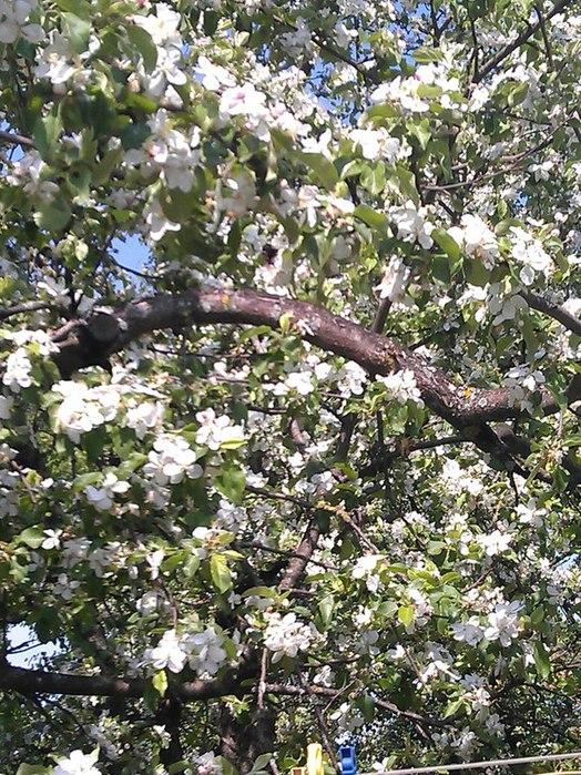 цветы (524x700, 177Kb)